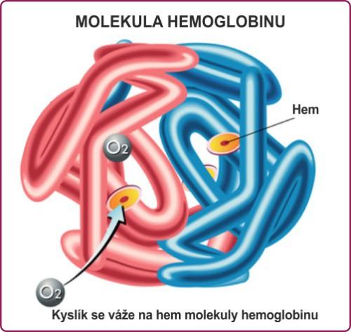 struktura hemoglobinu